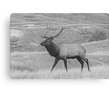 Walking Bull Canvas Print