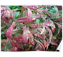 Morning Dew on Colorful Leaves Poster