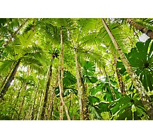 Palm Forest, Girringun National Park Photographic Print