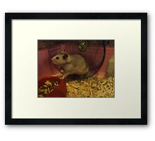 Beautiful Hamster