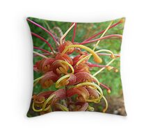 Grevillea bloom off new tree Throw Pillow