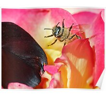 Black Feather, Angry Bee Poster