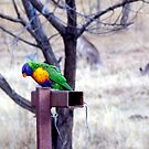 Bush Rainbow by Mark Batten-O'Donohoe
