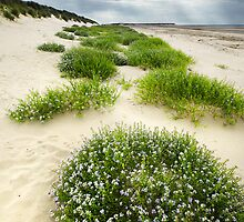 The Dunes of Thrift by Andy Freer