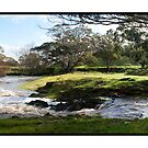Down at the Creek by Bronwyn Munro