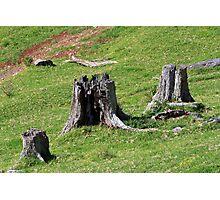 3 Stumps Photographic Print
