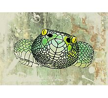 snake in green Photographic Print