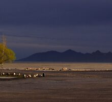 Great Salt Lake by John Michael Smith