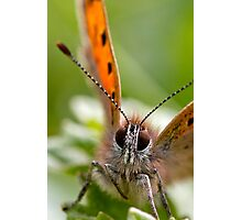 Small Copper - Large Photographic Print