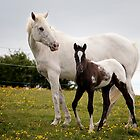 Appaloosa mare & foal ~ 3304 by heidiannemorris