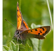 Small Copper - Large #2 Photographic Print