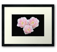 Textured Roses Framed Print
