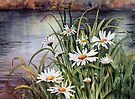 Daisies on the river bank by Ann Mortimer