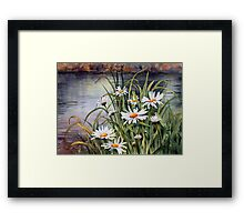 Daisies on the river bank Framed Print