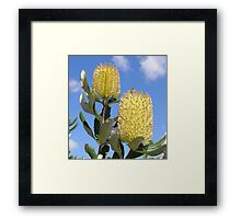 """Natures Brushes"" Framed Print"
