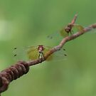Dragonfly Conversation by Tracy Wazny