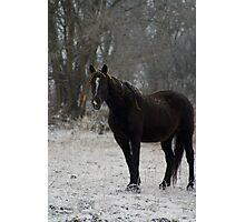 Lone Horse Photographic Print
