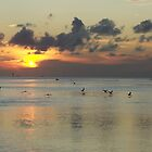 skimmers & herons by tamarama