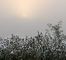 Wild flowers, fog and sunrise by Antanas