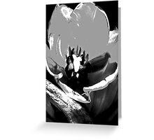 BW Tulip #10 Greeting Card