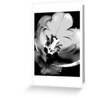 BW Tulip #14 Greeting Card