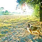 il cane in country by BellatrixBlack