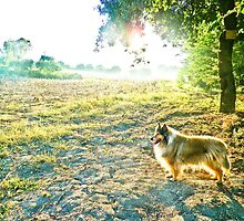 il cane in country by BellatrixBlack