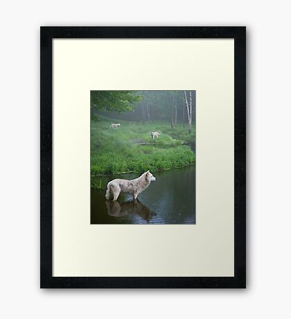 Three weary wolves Framed Print