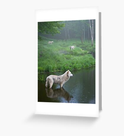 Three weary wolves Greeting Card