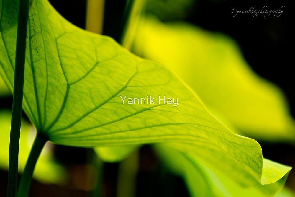 Lotus Leaf by Yannik Hay