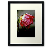 Age is a very high price to pay for maturity... Framed Print