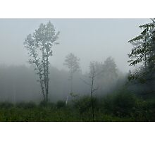 Fog symphony in forest (oak tree) Photographic Print