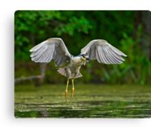 Night Heron flight Canvas Print