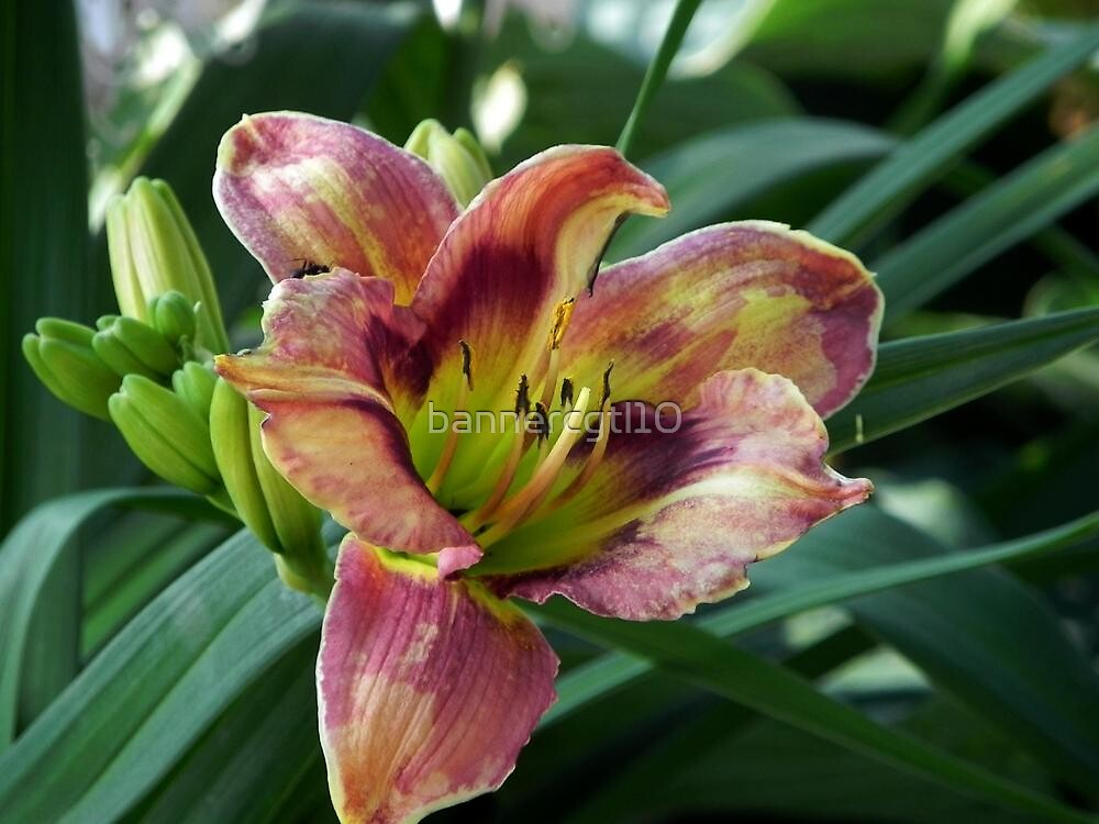 Michigan Lilly - St. Ignace by bannercgtl10