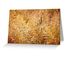 Golden cereal plant photo Greeting Card