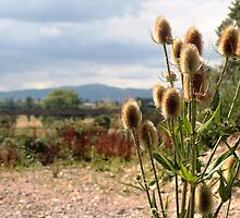 View of the Malvern Hills from Croome by LisaRoberts