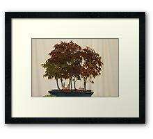 Bonsai 2 Framed Print