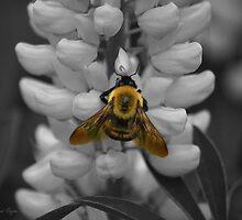 Bumble Bee Yellow by BPioro