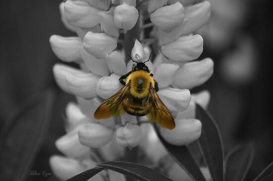 Bumble Bee Yellow by BPioro