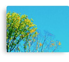 Fading Leaves Canvas Print