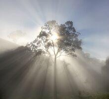 ~ Sunburst II ~ by LeeoPhotography