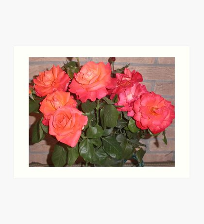 rose del mio giardino....italy - Europa - VETRINA RB EXPLORE GIUGNO 2014 Art Print