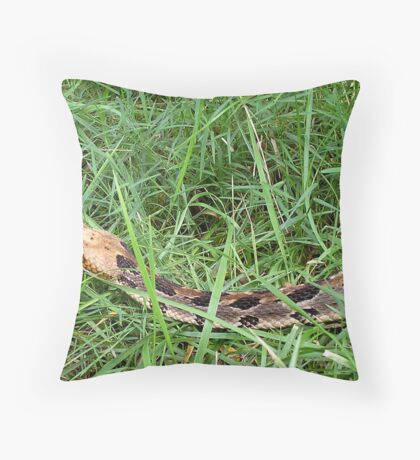 Beauty To the Eye Of THIS Beholder Throw Pillow