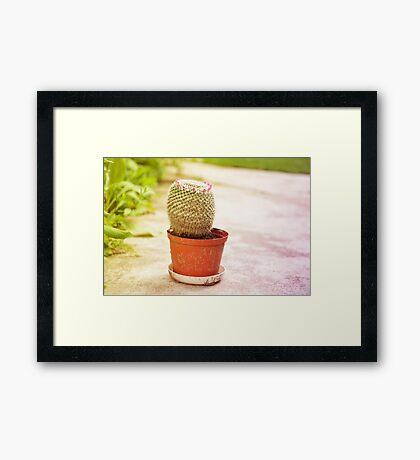 Cactus flowering pink blossoms Framed Print