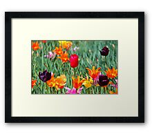Tulips For Spring Framed Print
