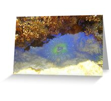 Sea Anenome Greeting Card