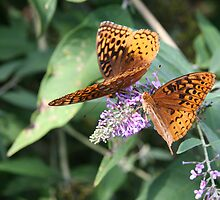 Two by Two - Great Spangled Frittilaries by WalnutHill