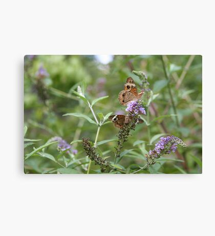Two by Two - Common Buckeye Canvas Print
