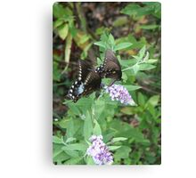 Two by Two - Spicebush Swallowtail Canvas Print