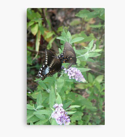 Two by Two - Spicebush Swallowtail Metal Print